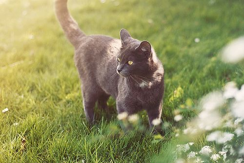 Looks exactly like my kitty Miss Lucy. | Cat love, Cats, Kitty