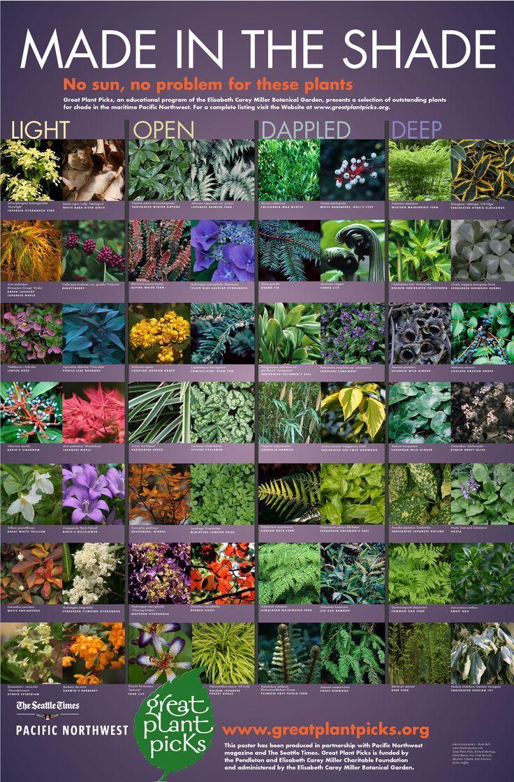Pin By Morningchores On Gardening Shade Garden Plants Shade Garden Design Plants