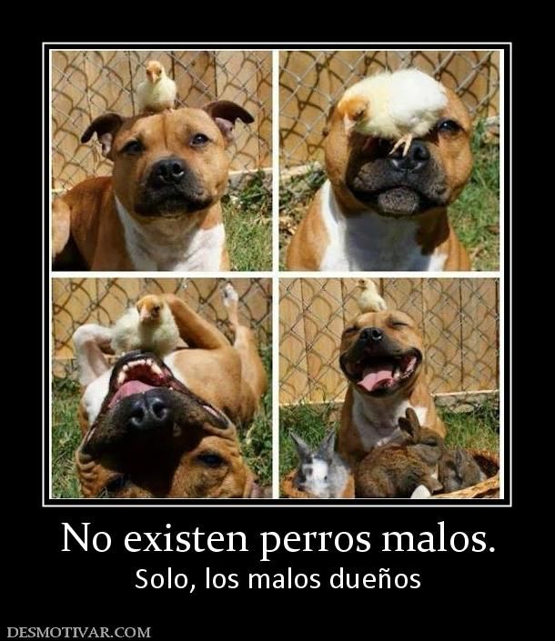 Desmotivaciones No Existen Perros Malos Solo Los Malos Duenos Cute Funny Animals Cute Animals Funny Animals