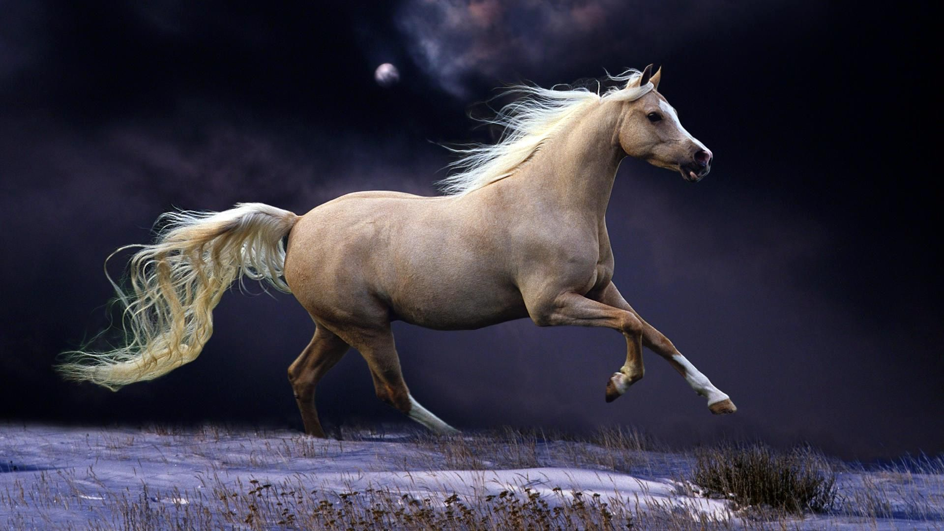 Must see Wallpaper Horse Stunning - 2a47f47be09d46e3038703debbbbdcf0  Collection_465140.jpg