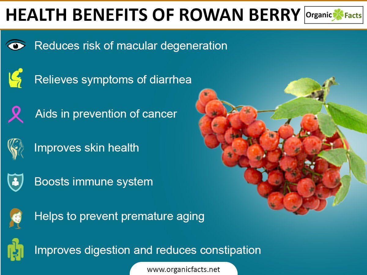 Bildresultat för rowanberry infographic