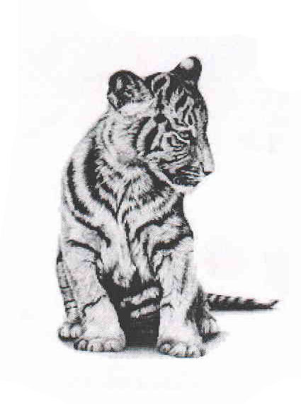 This Listing Is For One High Quality Temporary Tattoo Of Asian Tiger