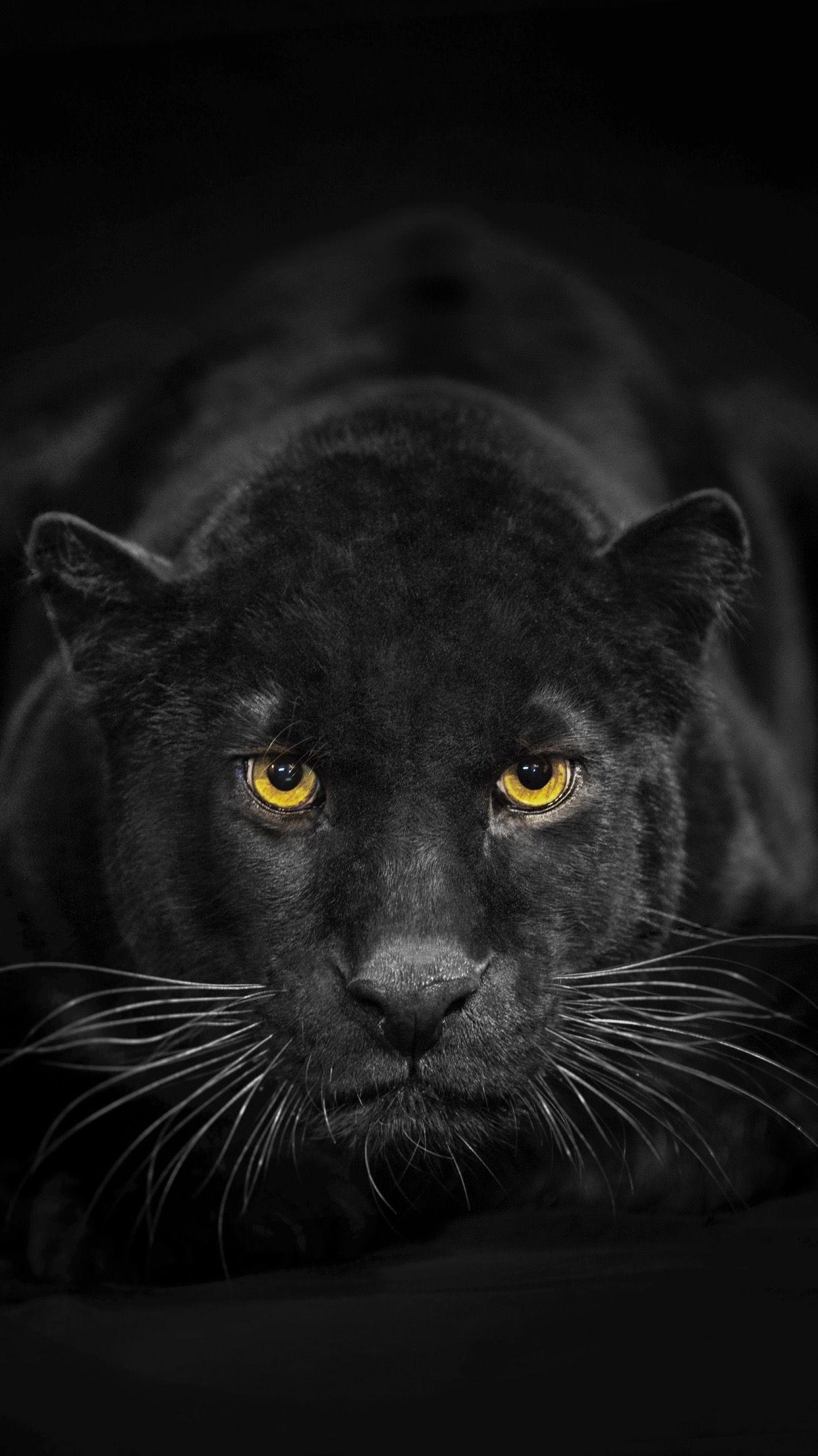 Black Panther Animal Wallpaper 4k Iphone