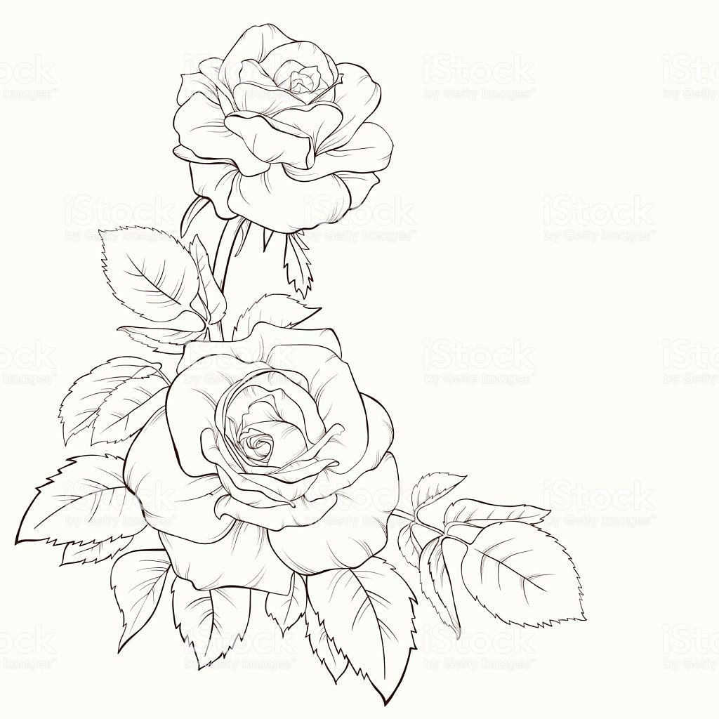 Rose flower. Hand-drawn contour lines and strokes. Element for