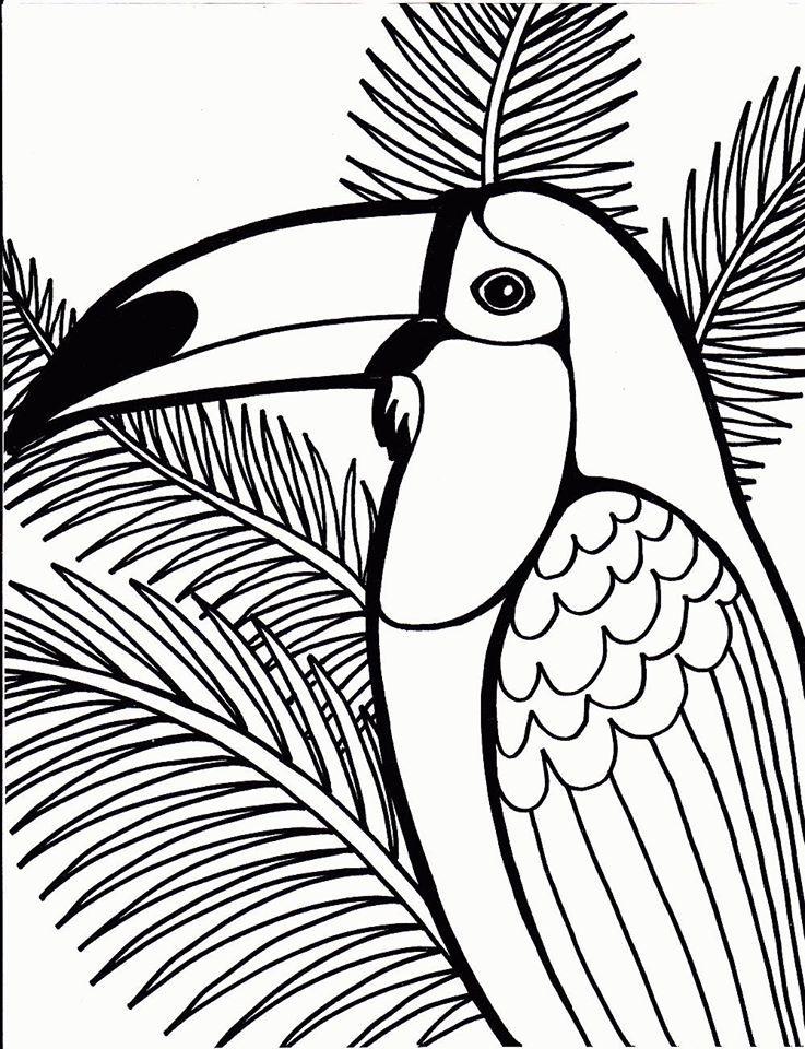 Tucano Ilustracoes Graficas Passaros Pintados