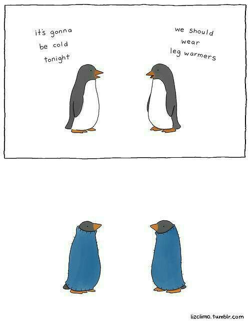 Pin by Aimee Bucher on Laugh | Pinterest | Penguins, Animal and Humour