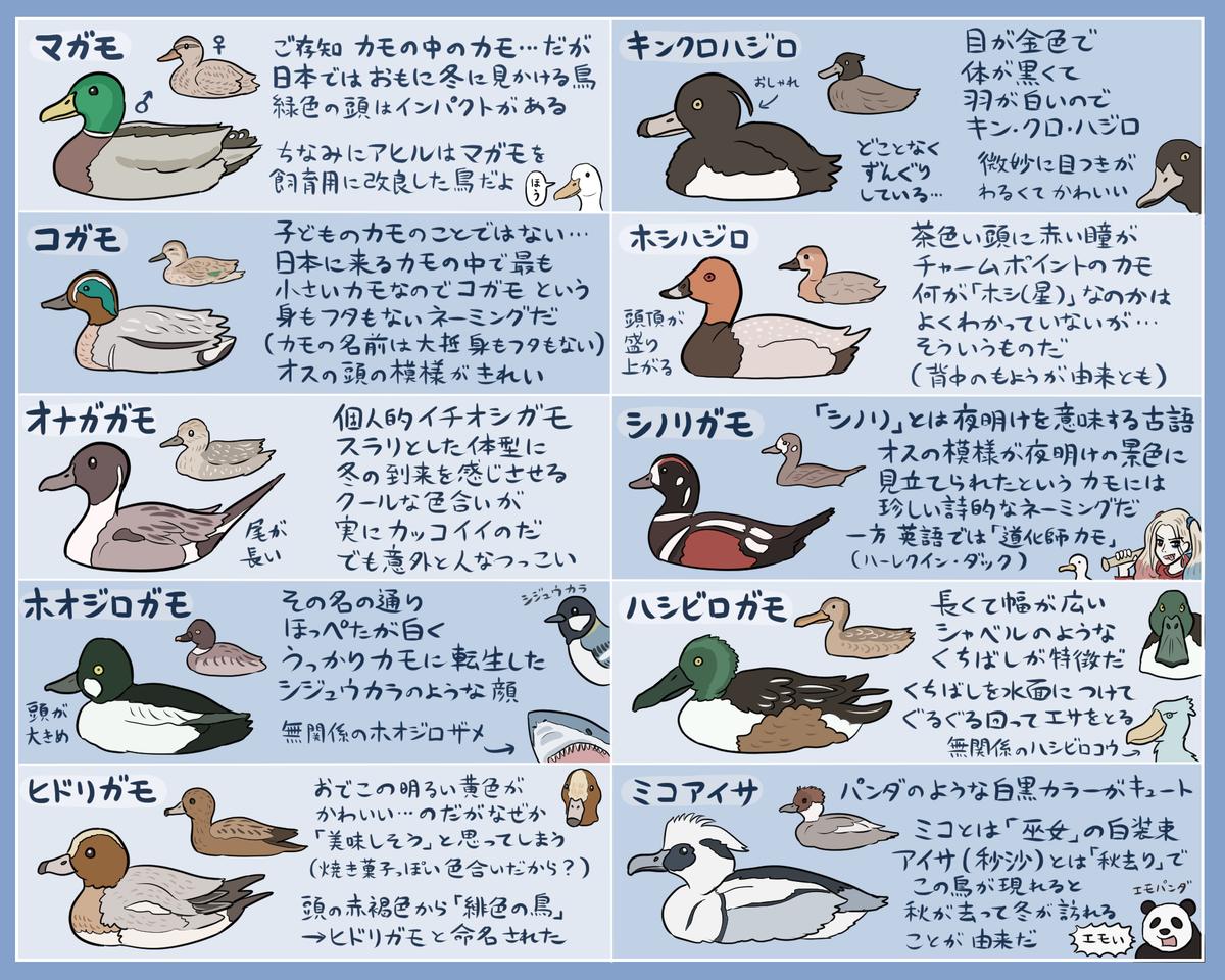 ぬまがさワタリさんのツイート 本格的に冬の訪れを感じる今日このごろなので ぼちぼち日本に渡ってきている冬のカモ達の早見表を作ってみました よろしければ水辺で役立ててください あくまでカモの一部です 名前の由来も諸説あるもよう Https T Co