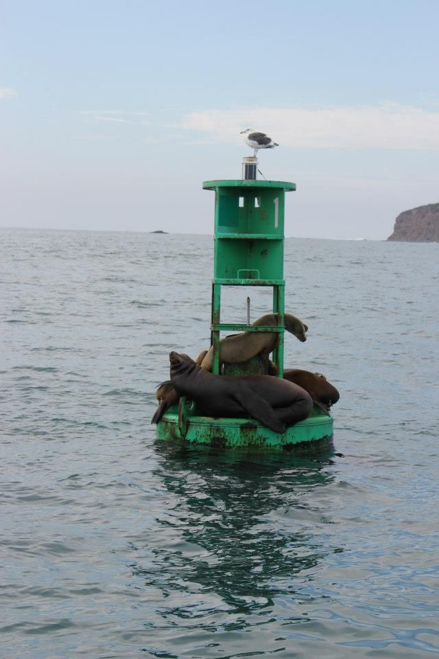 Steve goes dolphin-watching, finds seals...