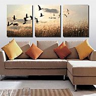 Stretched+Canvas+Art+Landscape+Farmland+Set+of+3+–+GBP+£+34.99