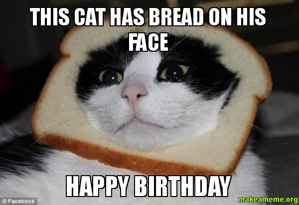 meme happy birthday cat | funny meme | Pinterest ...