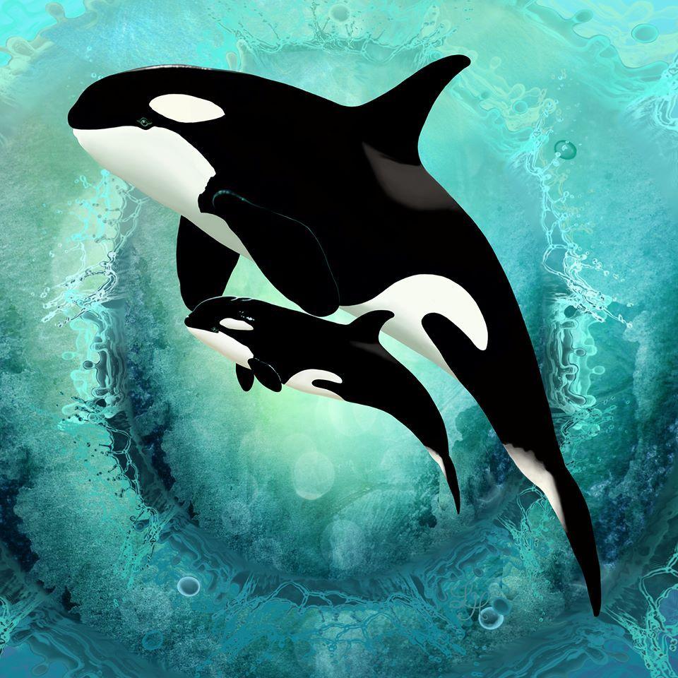 Pin de Gem del mar en ~^~Orcas~^~ | Pinterest | Mamá, Bebé y Animales