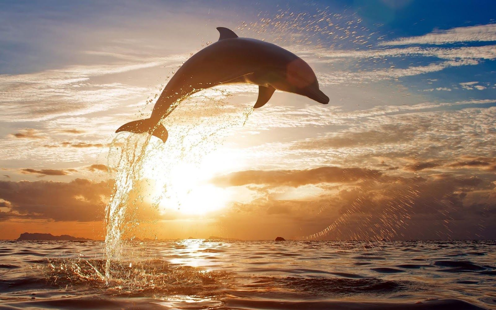 photo-of-a-dolphin-jumping-high-out-of-the-water-at ...