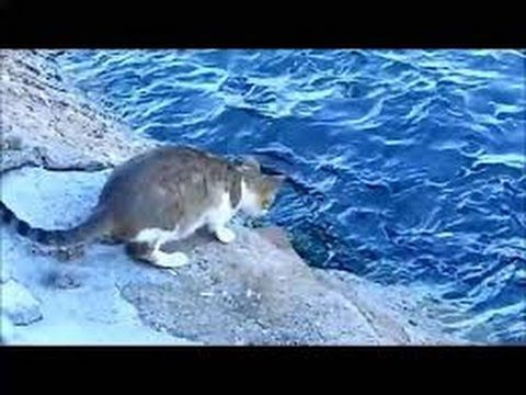 قط يحب يصطاد من البحر ههههه Cats Catching Fish Cats And Kittens