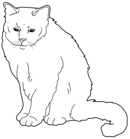 Superior Burmese_cat Cats Coloring Pages For Teens And Adults Nice Look