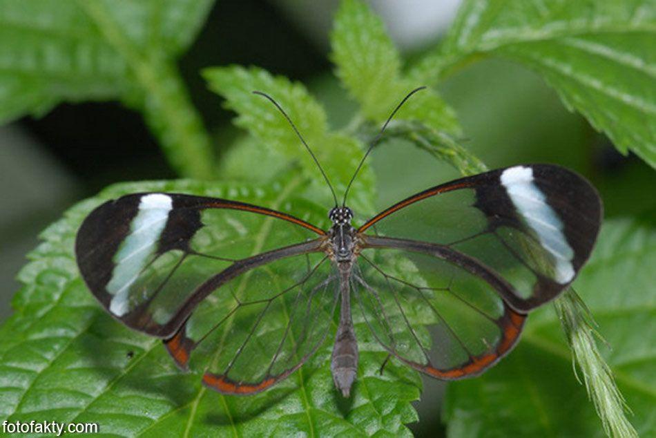 никогда картинки с прозрачными крыльями очень