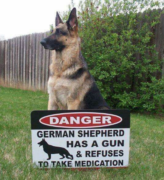 The German Shepherd Hope you're doing well.Hope you're doing well.From your…