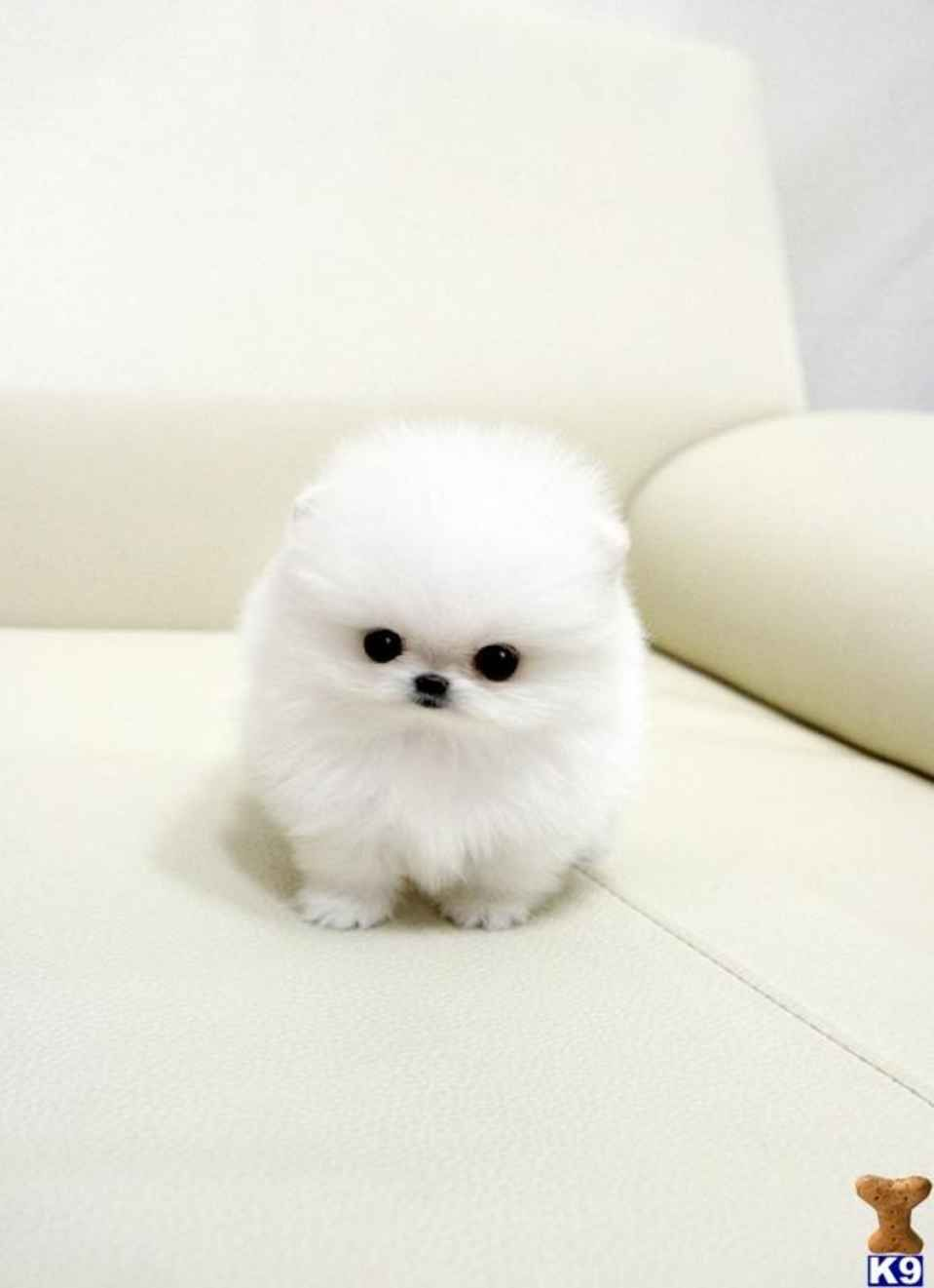 The 15 Most Fluffy And Cute Animals In The World In 2020 With