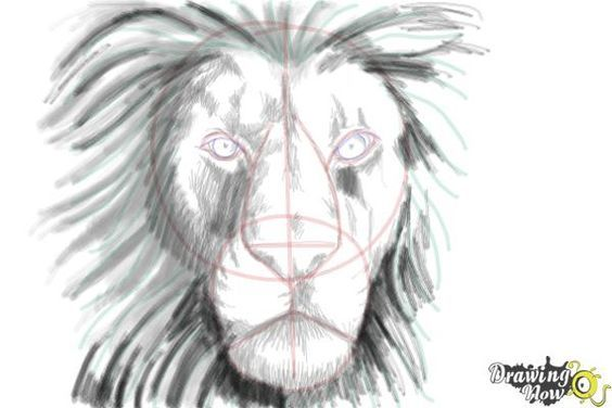 Line Art Lion : How to draw a lion face drawingnow lions
