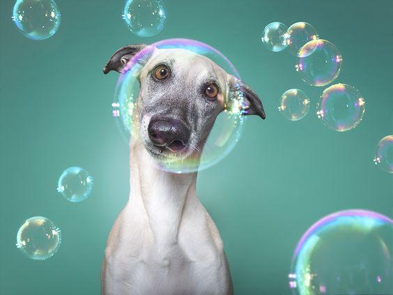 Pin On Dogs Fun