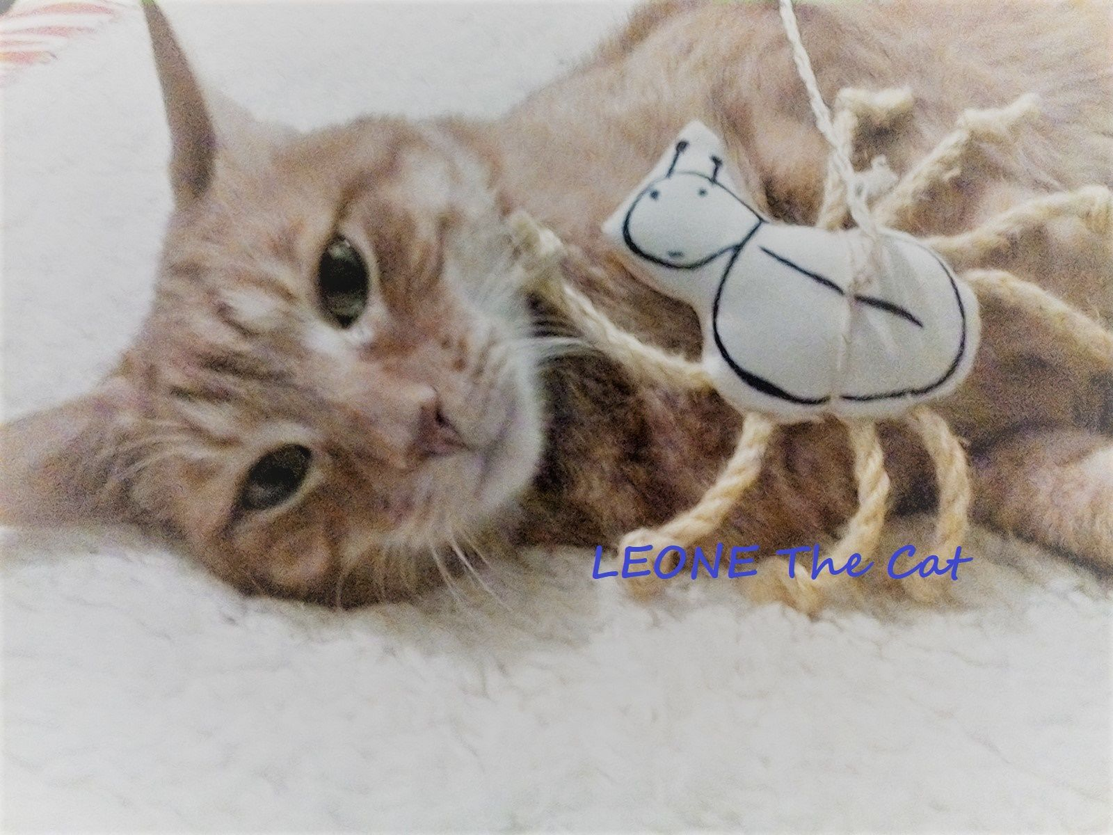 Leone The Cat And The Spider D Cats Ginger Cats Animals