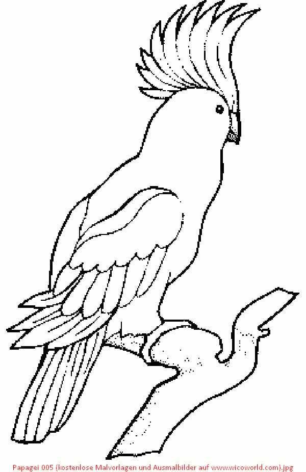 Ausmalbilder Papagei