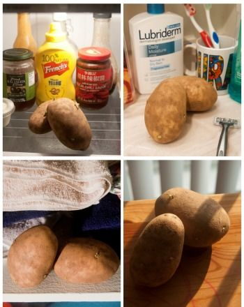 Under What Conditions Do Potatoes Sprout The Fastest Science Project Education Com Potato Science Fair Project Third Grade Science Fair Science Fair Projects