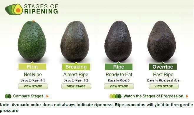 Stages Of Ripening Stop Eating Raw Avocados Avocado Workout Food How To Pick Avocado