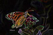 - Butterfly Garden 01 - Monarch