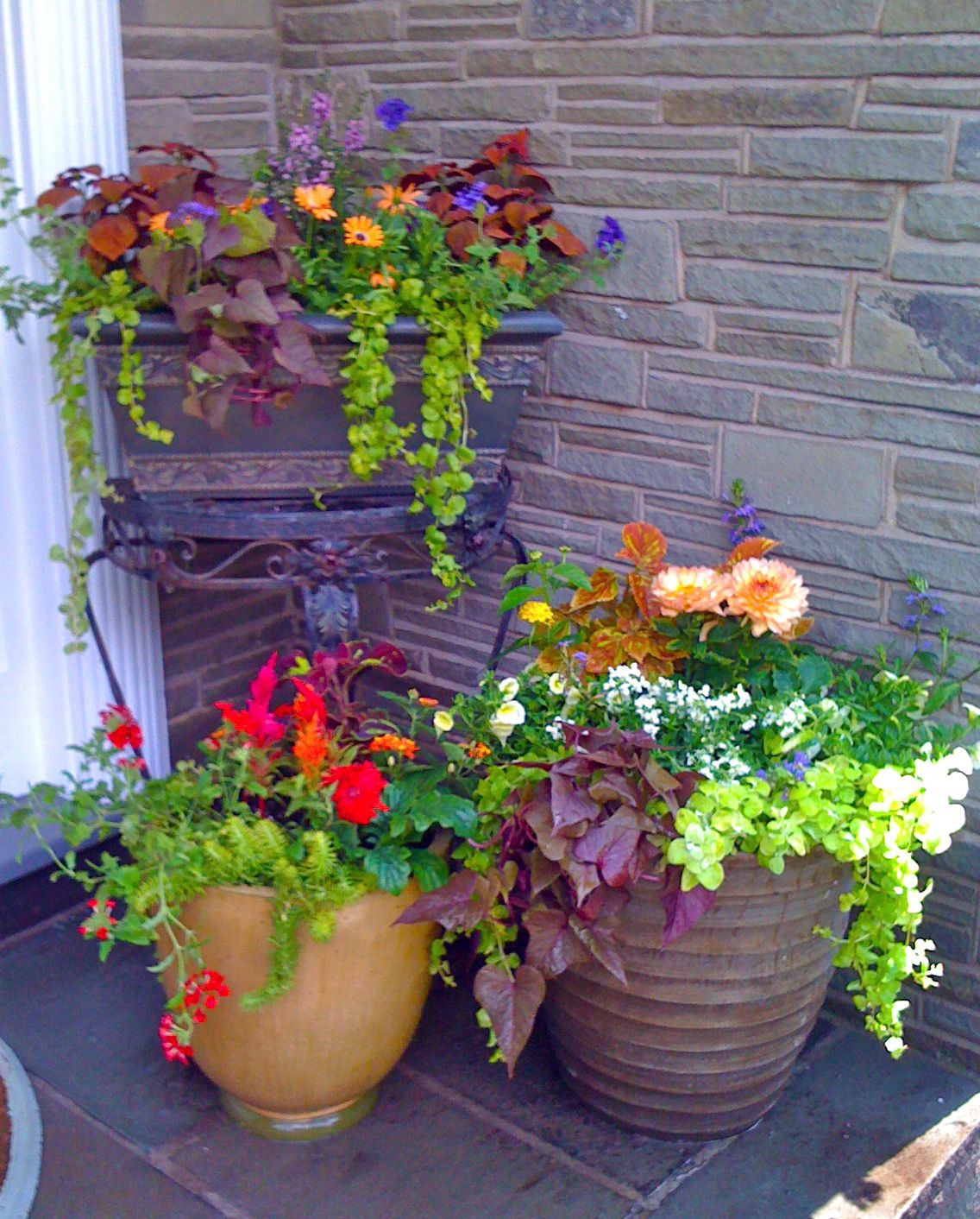 Flower pots for residential client k 2010 gardens for Decorating patio with potted plants