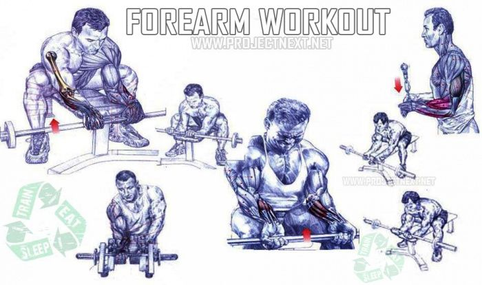 Forearm Workout - Healthy Fitness Exercises Gym Bicep Tricep