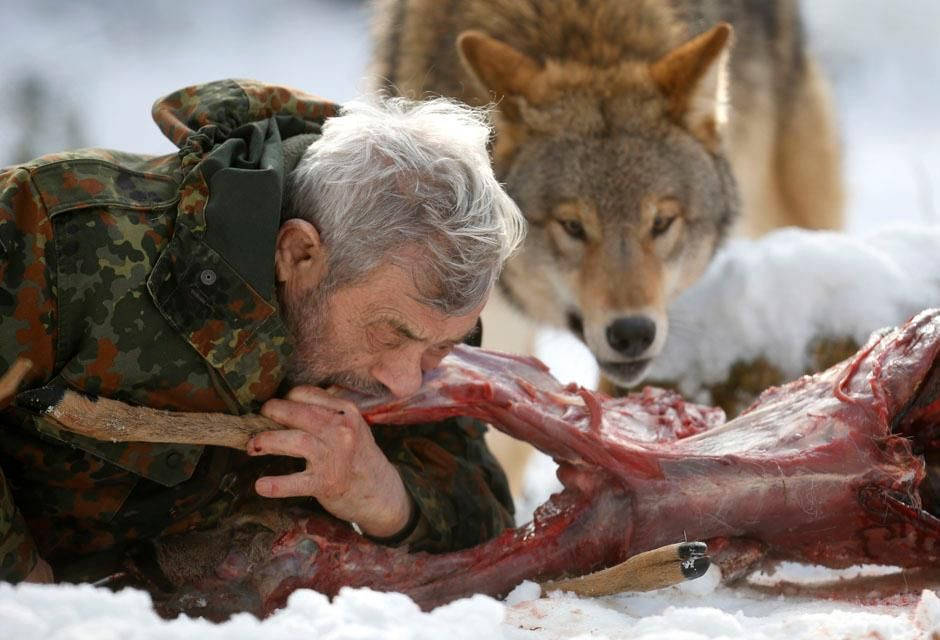 Wolf Researcher Werner Freund Bites Into A Deer Cadaver Next To A Mongolian Wolf Weird People Pictures Photos Of The Week Unusual Pictures