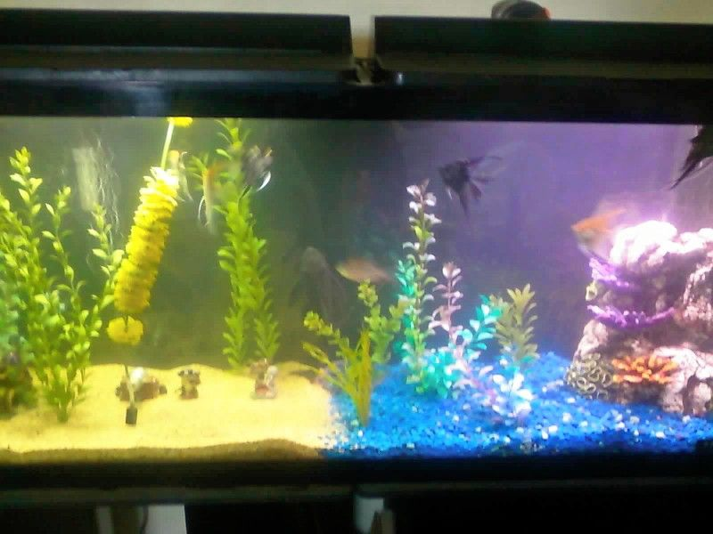 Homemade Fish Tank Decorations] Easy Diy Fish Tank Decorations .