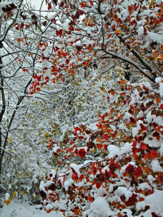First snowfall in Boulder, Colorado.