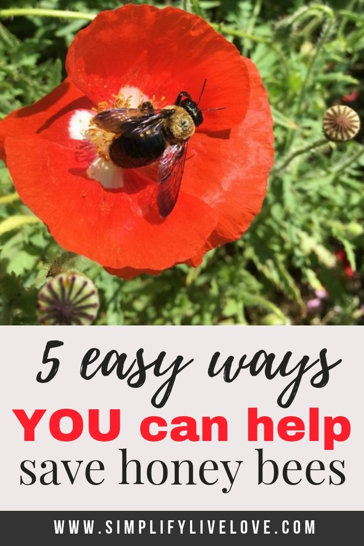 You don't have to be a beekeeper to help save the honey ...