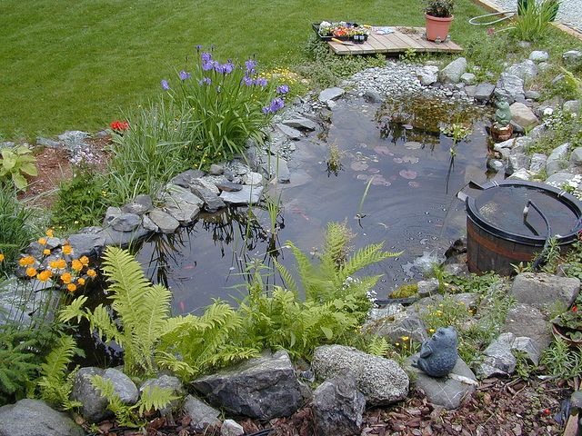 Tips for Building Your Own Pond Garden ponds, Pond and Wildlife - mini jardin japonais d interieur