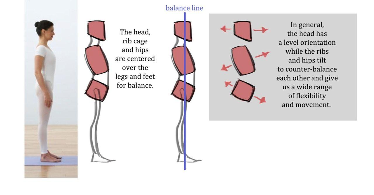 Drawing Art Anatomy Figure Tips Reference Tutorial Posture Gesture