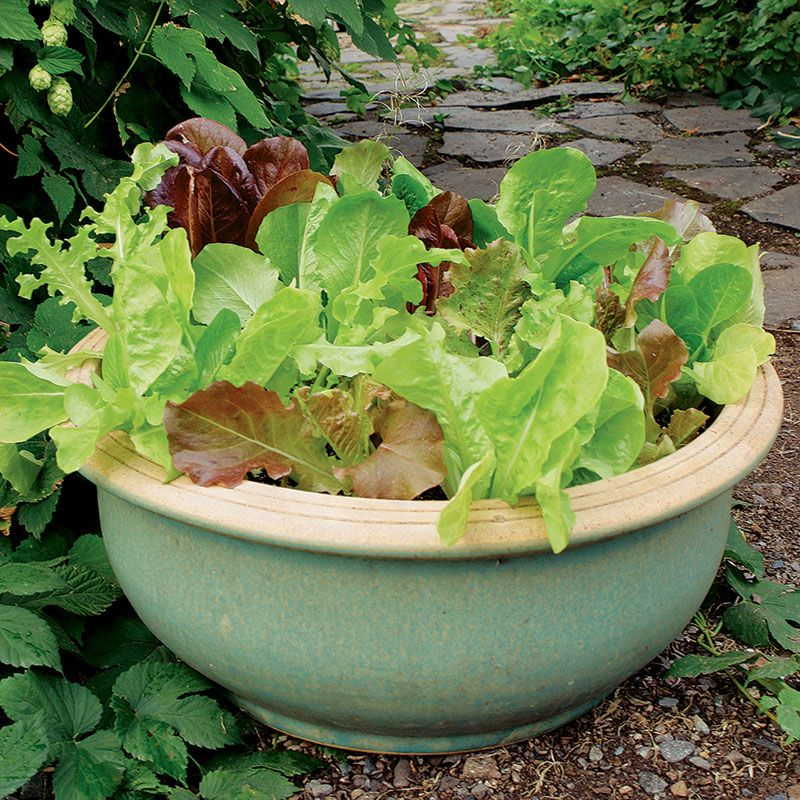 Potted Vegetable Garden Ideas Part - 32: Image Detail For -Growing Vegetables In Containers - Vegetable Gardener