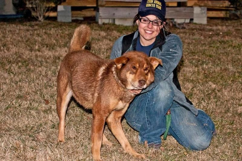 Adopt Ashe on Petfinder in 2020 Husky dogs, Dog adoption