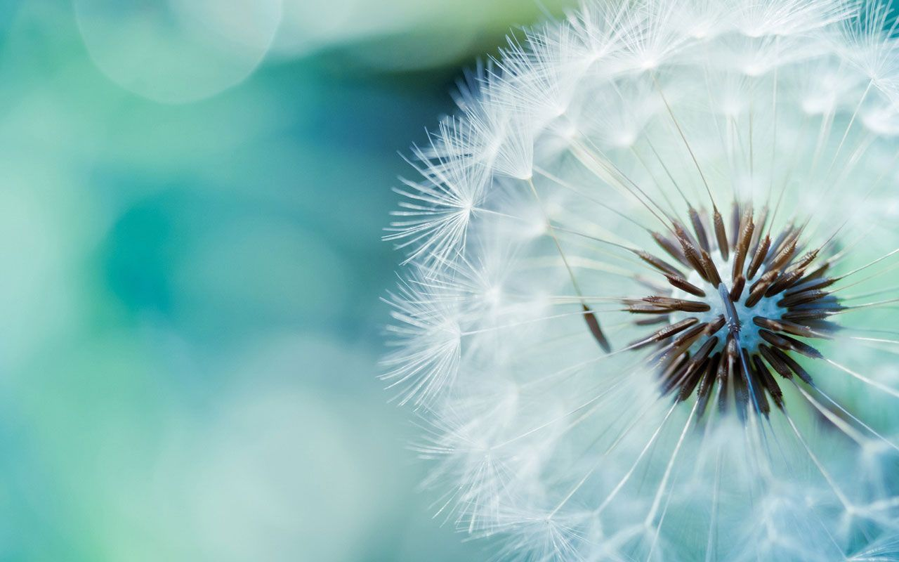 Pin By Emily Vos On Fauna Flora In 2020 Dandelion Wall Art Nature Photography Flowers Photography