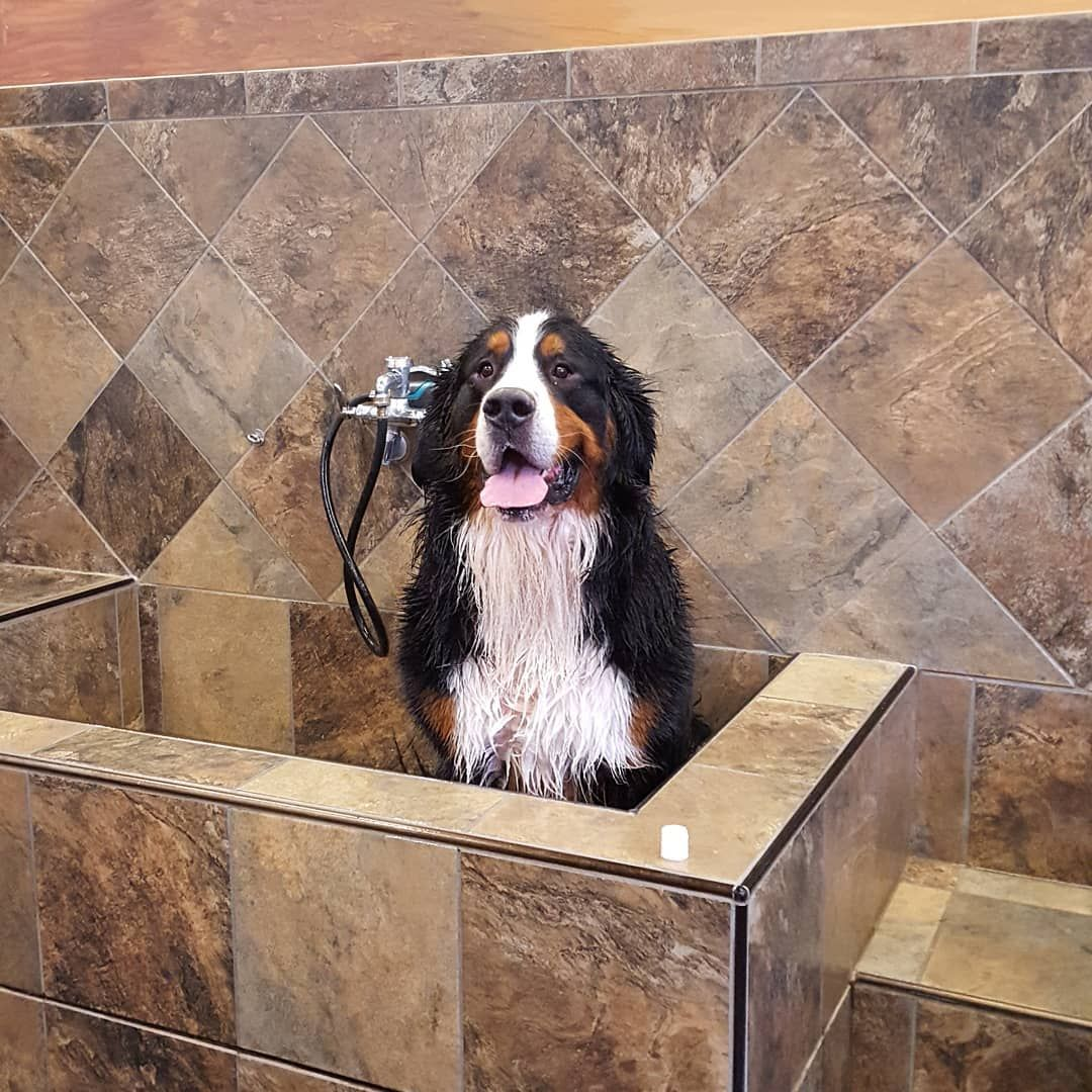 Cutecustomeralert Mungas Is Kicking Off His Weekend With A Bath Pet Valu With Images Pets Instagram Cute