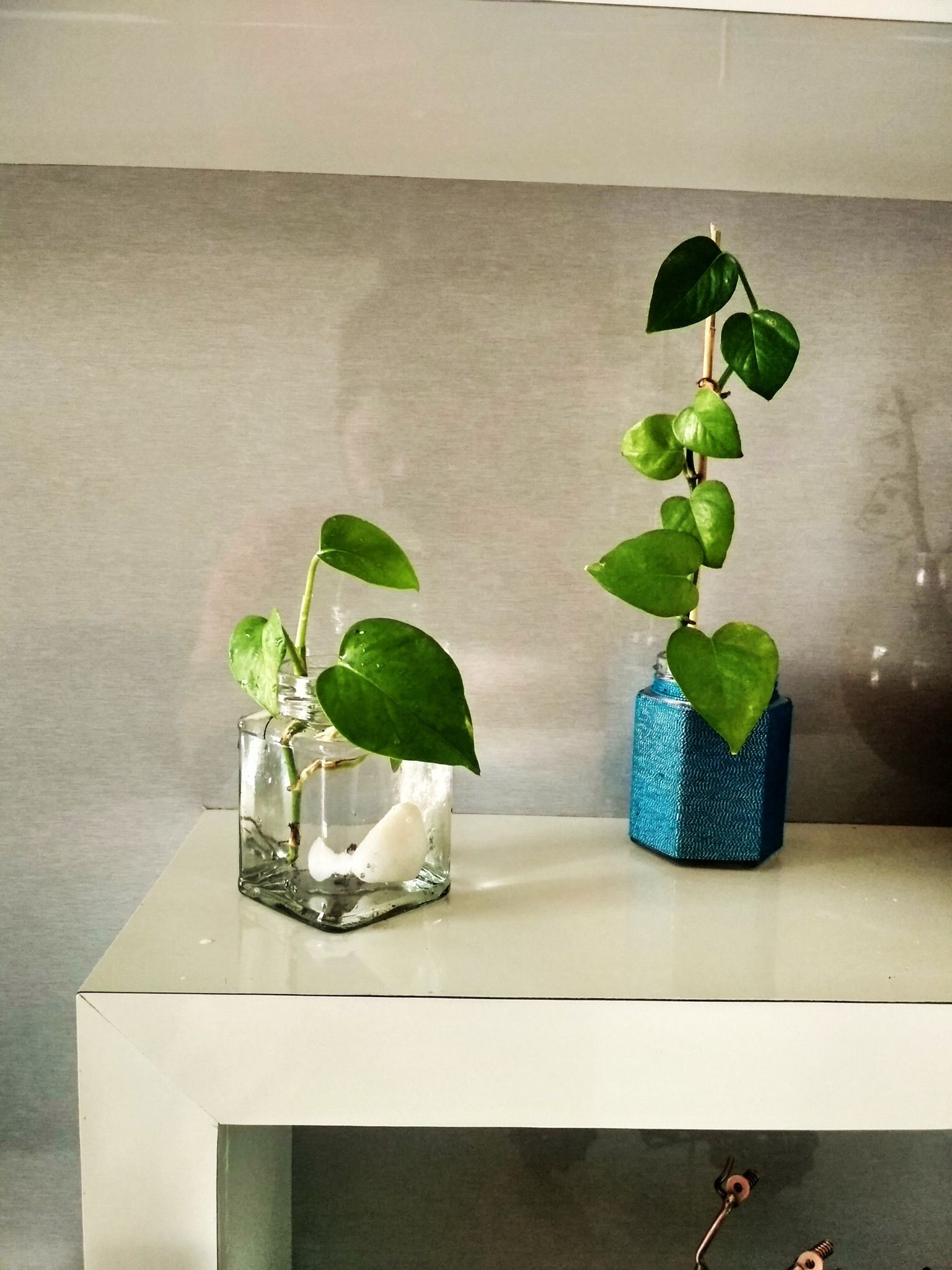 Money Plants Best For Indoor And Very Good For Decor Living Room Money Plant Indoor Indoor Plants Indoor Decor