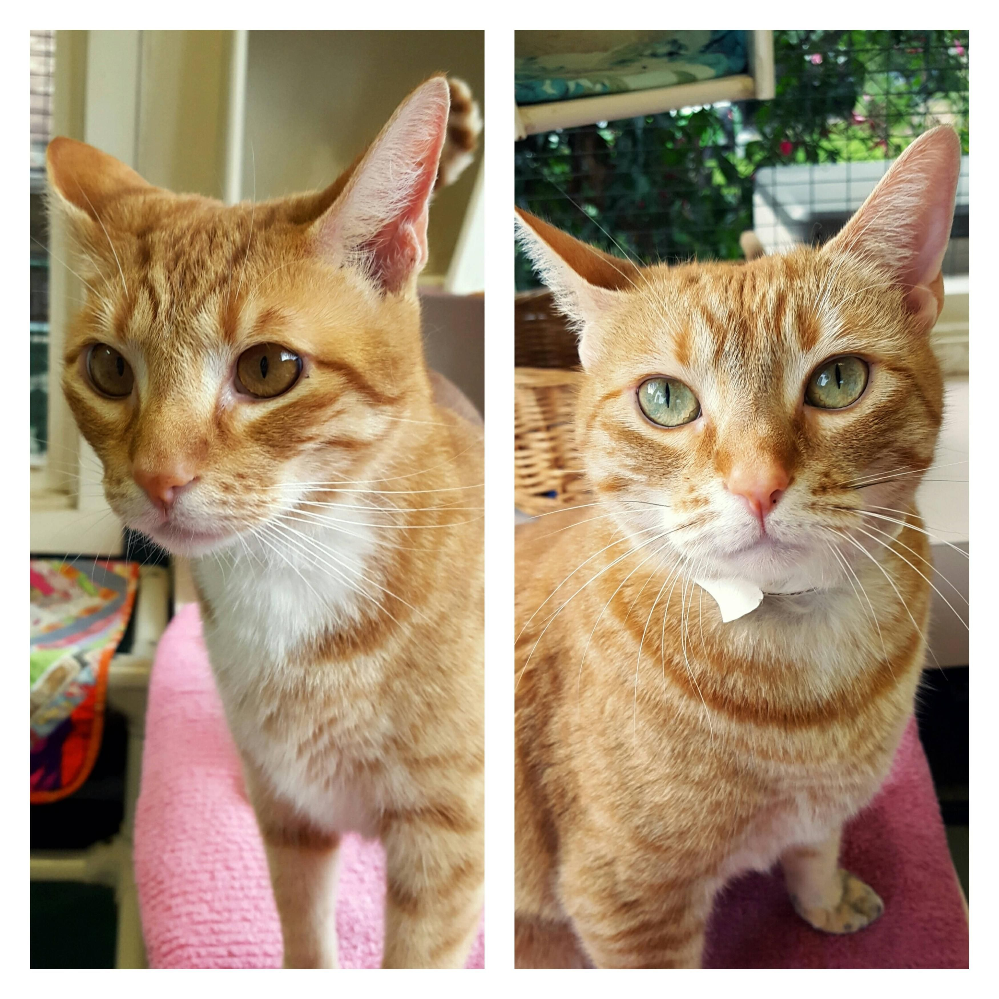 These handsome fellas are available for adoption at the