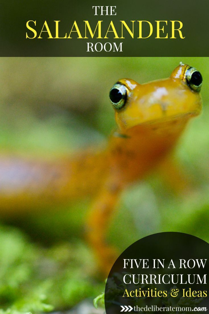 Come see how we used Five in a Row with the book, The Salamander Room, to weave a diverse and comprehensive curriculum. There are links to many helpful resources as well!