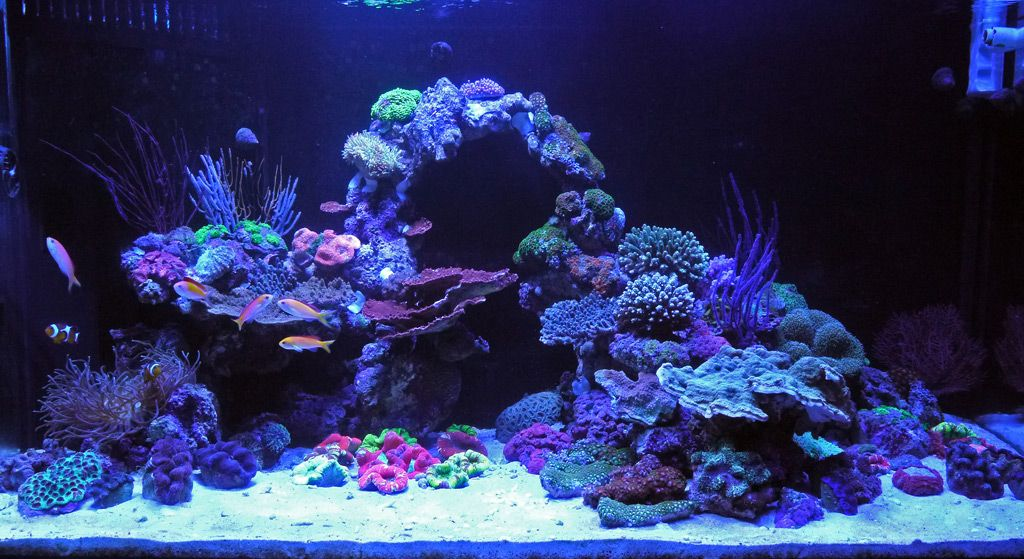 aquascape comments suggestions aquascape for my