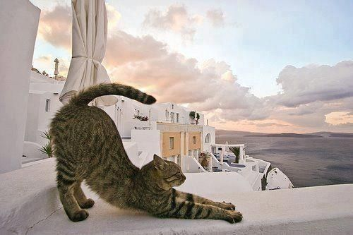 Taking an early morning stretch in Santorini..