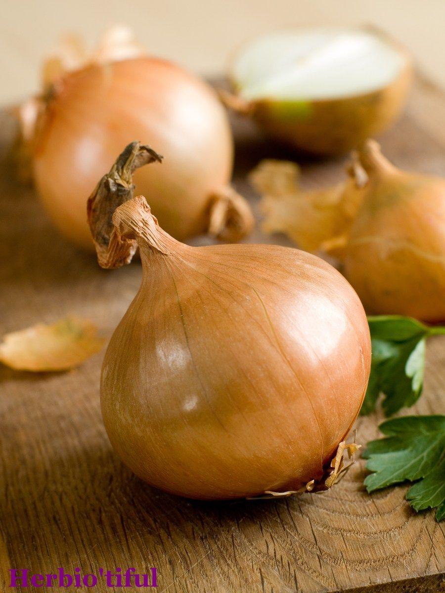 Les bienfaits de l'oignon, Allium cepa Alimentation