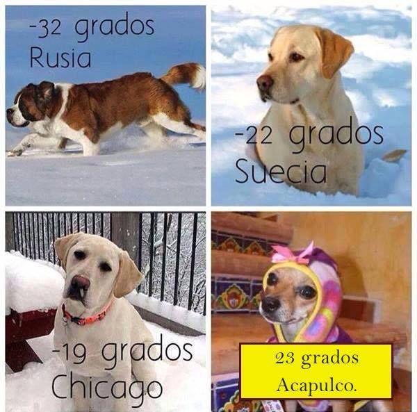 Dogs Around The World Suffering The Cold Frio De Perros Perro Gato Perros