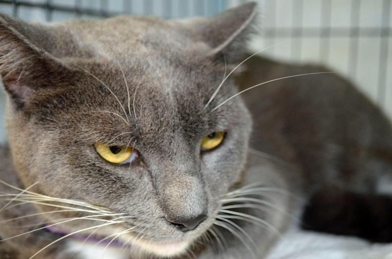 Sky Is Very Scared At Adoption Events She S Not Used To Being Caged And Does Not Show What A Wonderful Girl She Is While She S Cat Adoption Adoption Day Cats