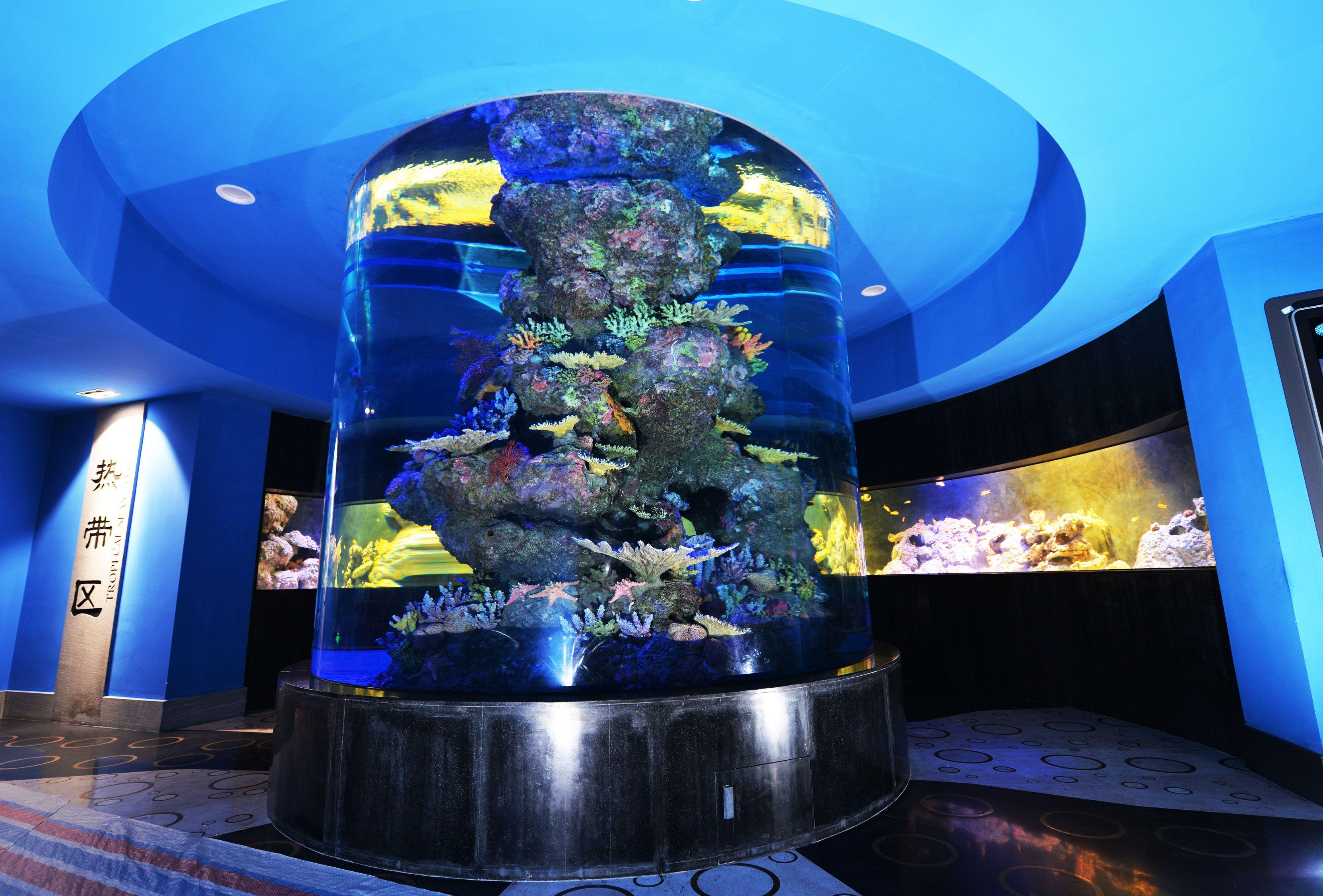Aat cylinder aquarium exhibit in the cube oceanarium for Aquarium cube