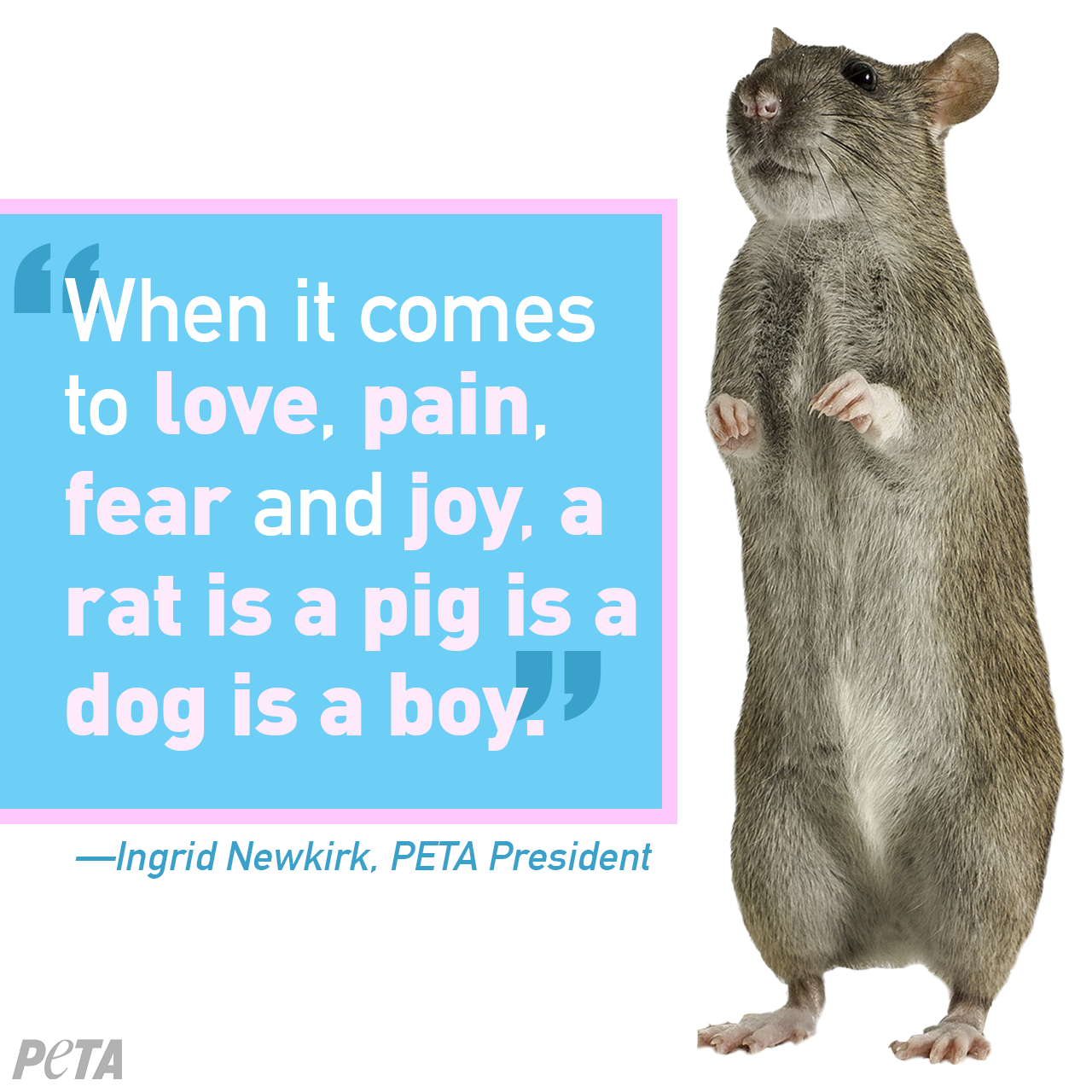 A Rat Is a Pig Is a Dog Is a Boy | Animals | Animal